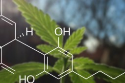 Medical Cannabis in Treating Cancer Symptoms